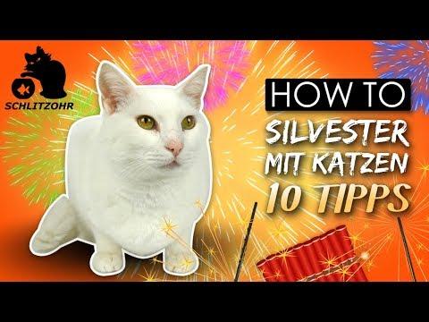 🔥10 Tipps Für Silvester Mit Katzen | Stressfreies Silvester Mit Katze | Katzentipps
