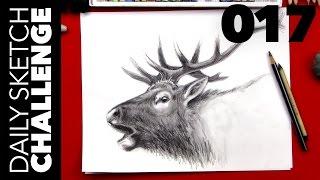 Daily Sketch Challenge 017: Elk (45 min)