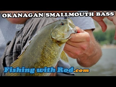 Fishing With Rod: Okanagan Smallmouth Bass