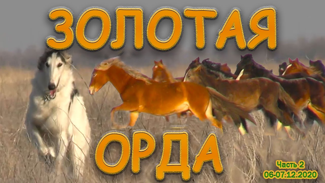 ЗОЛОТАЯ ОРДА  Ч2  Состязания борзых собак Палласовский район 06 07 12 2020г