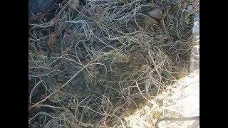 видео Апрельские хлопоты: главные весенние работы в саду и огороде