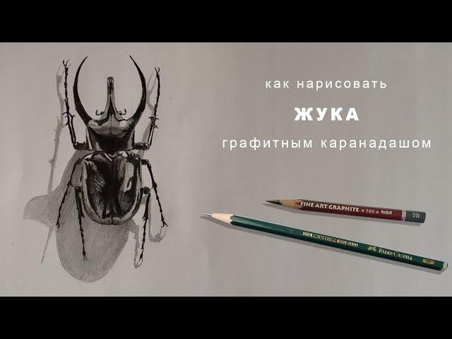 как нарисовать жука карандашом how to draw a beetle with a pencil