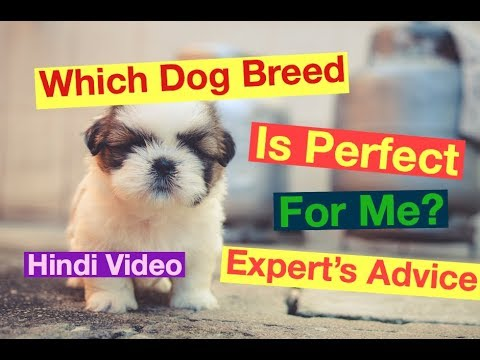 Which Breed Of Dog is  Perfect For Me & My Family Hindi Video By Dr Vishal