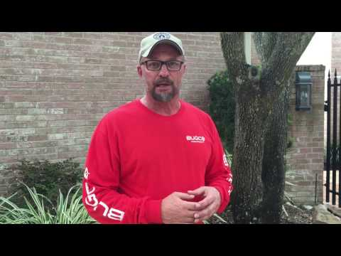 What's the Cost of Termite Treatment - Houston Katy Richmond TX