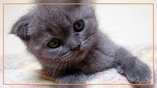 Спасение котят, которые попали в беду. (Life Story)
