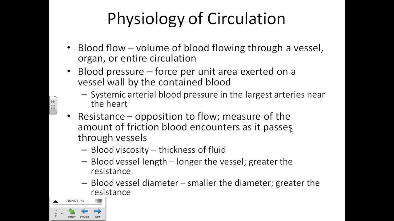 Blood Vessel Lecture part 1 Dr. Parker\'s A&P II - YouTube