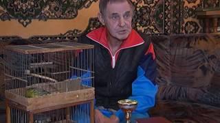 Почему птицам нужны уроки пения и боятся ли канарейки микрофонов?