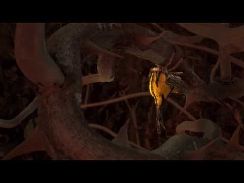 3D Treehopper (Umbonia Spinosa)