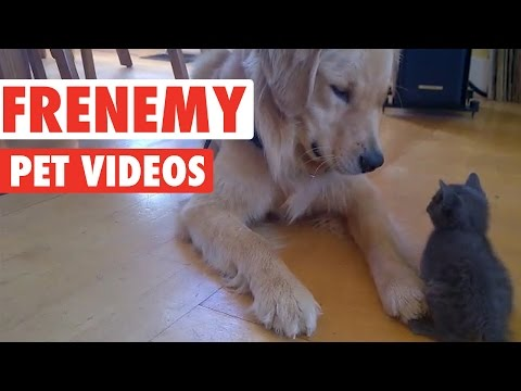 Funny Frenemy Pet Compilation
