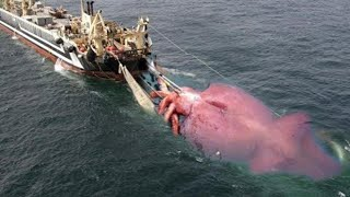 BIG Giant Squid Caught on Boat - Net Fishing