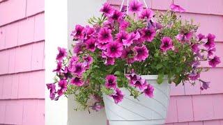 Sete Plantas pequenas para Vasinhos