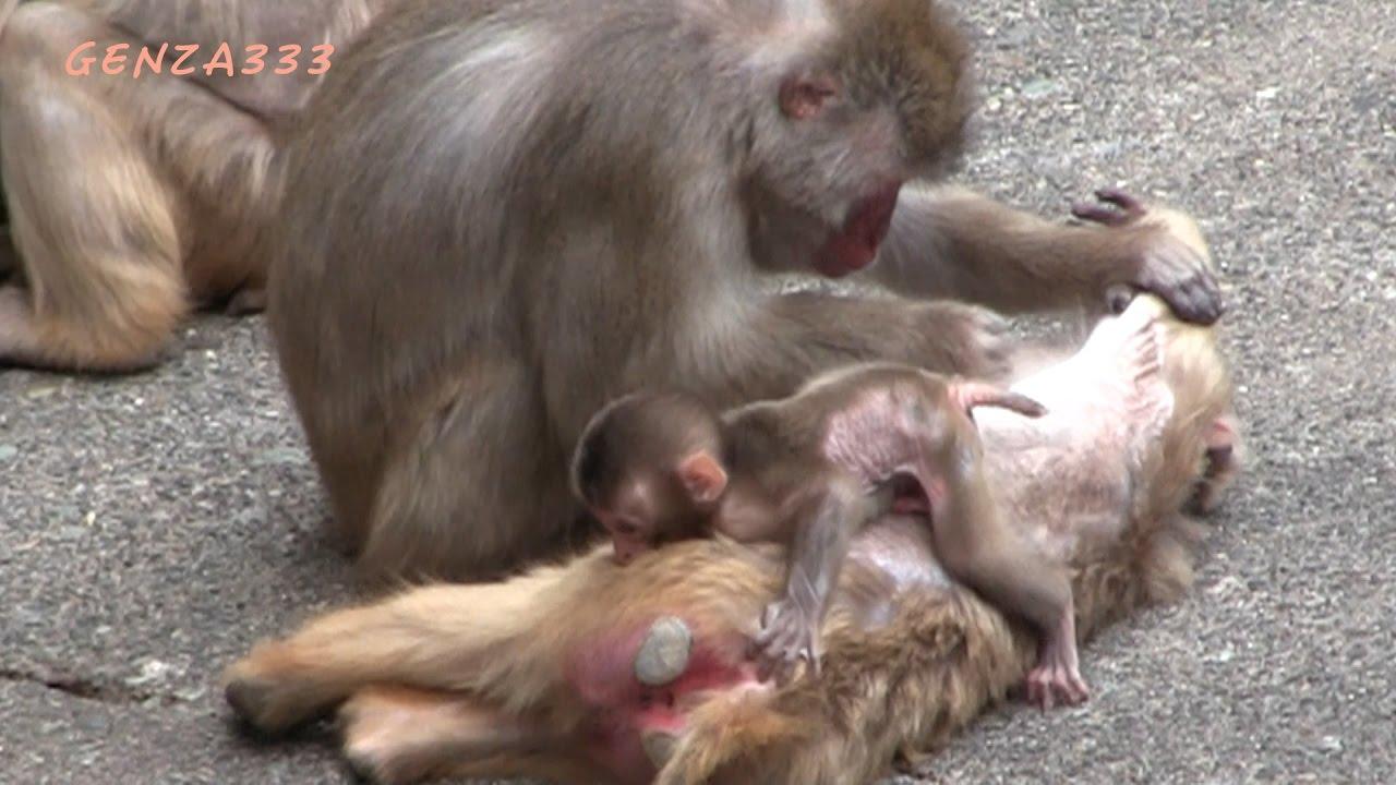 Cute Baby Monkey Newborn Baby Animal Youtube