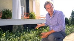 Ground Cover for Landscape Trouble Spots | At Home With P. Allen Smith