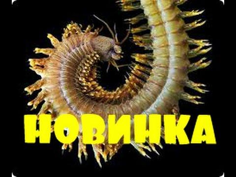 Купить насадки и наживки для рыбалки в магазине это. Широкий ассортимент!. Лучшие рыболовные наживки оптом и в розницу по доступнвм ценам в украине.