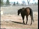 Horse Owner Survival: Feeding Horses, as seen on eXtension