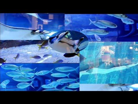 #hello #uae  #Underwater #equarium #dubaimall