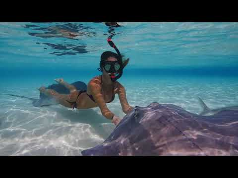 SWIMMING with STINGRAYS in the Cayman Islands
