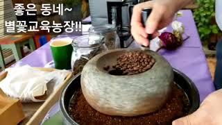 별꽃교육농장 서천군 맷돌 커피 바리스타  드립포트 분쇄…