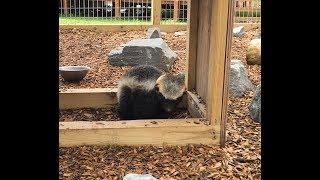 Animal Adventures with Jordan: Honey Badgers thumbnail