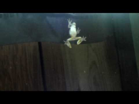 Frog Crawling On The Window