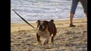 Dog Porn...Humps Giant Ball THEN a Woman on Laguna Beach!