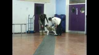 Akita Puppy From The Stecal Kennels Uk
