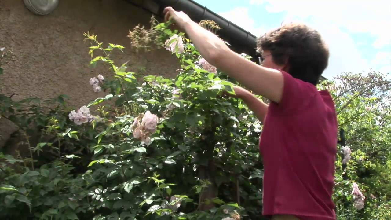 Faire fleurir son jardin youtube for Fleurir son jardin