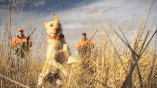 Pheasant hunting is not highly complex In fact a major key to improving chances of shooting a ringnecked rooster is to spend some time continually practicing