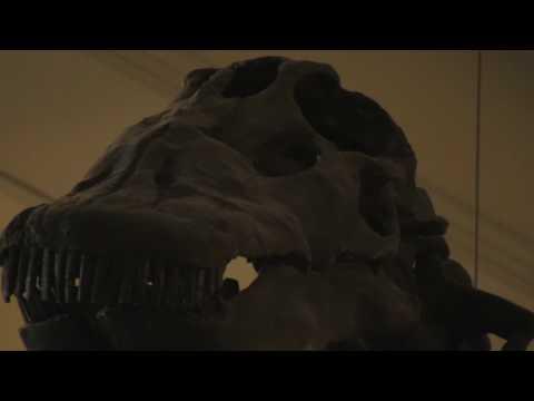 Apatosaurus (Brontosaurus)