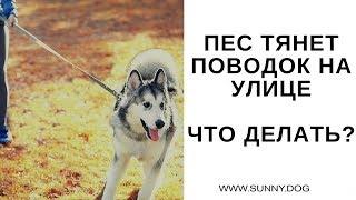 Собака тянет поводок на улице? Что с этим делать? Практика. Часть 4