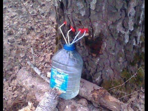 Как правильно собирать березовый сок. Загадки леса.