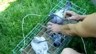 Почтовые голуби олега чебоксары(, 2010-07-22T06:16:39.000Z)