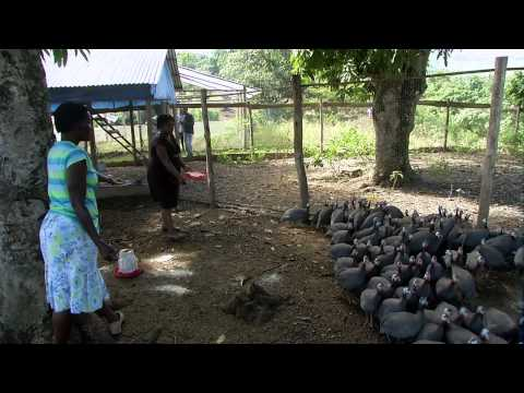 Libon Verde: changes of daily life in Haiti