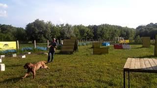 """Общий курс дрессировки собаки """"Американский Бандог"""""""
