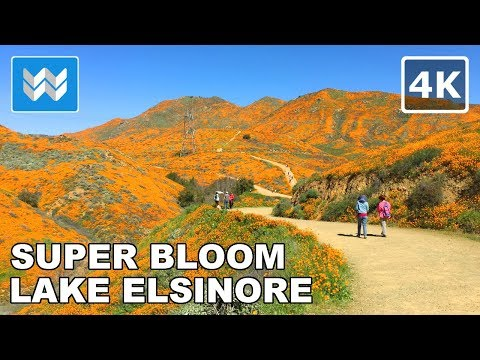 SUPER BLOOM 2019 Poppy Fields in Walker Canyon, Lake Elsinore California Virtual Walk Tour 【4K】