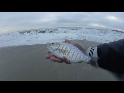 How To Catch Fish In Rough Surf