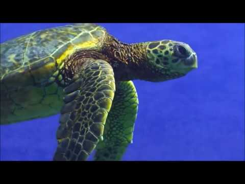 Climate Change & Sea Turtles #Film4Climate