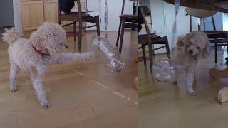 Побудувати Найдешевший Вихованець Забавна Іграшка/Повільна Собака Фідер В 5 Секунд