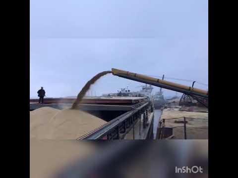 Загрузка судна Волго-Дон 5017 зерном ленточным конвейером Convey-All