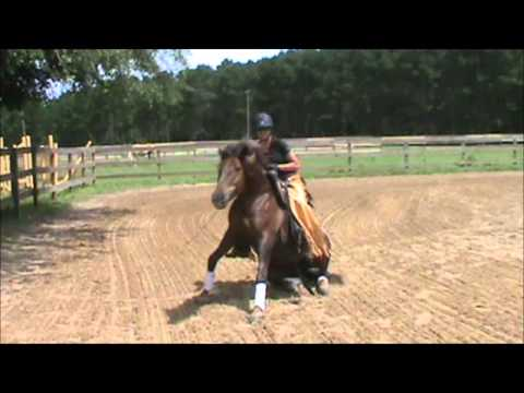 Rates and Services — Southern Oaks Equestrian