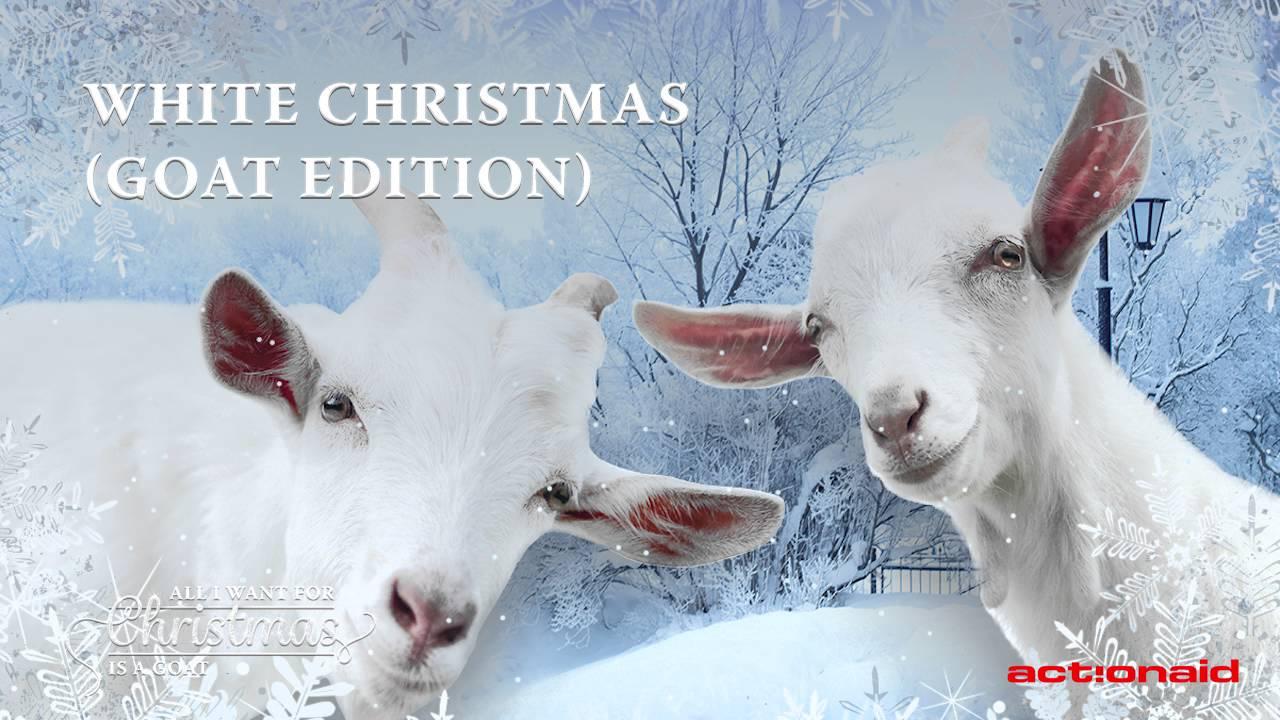 Christmas Goat.White Christmas Goat Edition