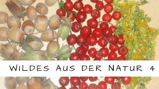 Essbare Wildkräuter, Blätter und Wildfrüchte Teil 4