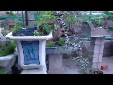 Vườn Cây Cảnh Lagi: Dương Liễu, bông trang, cây dương ...