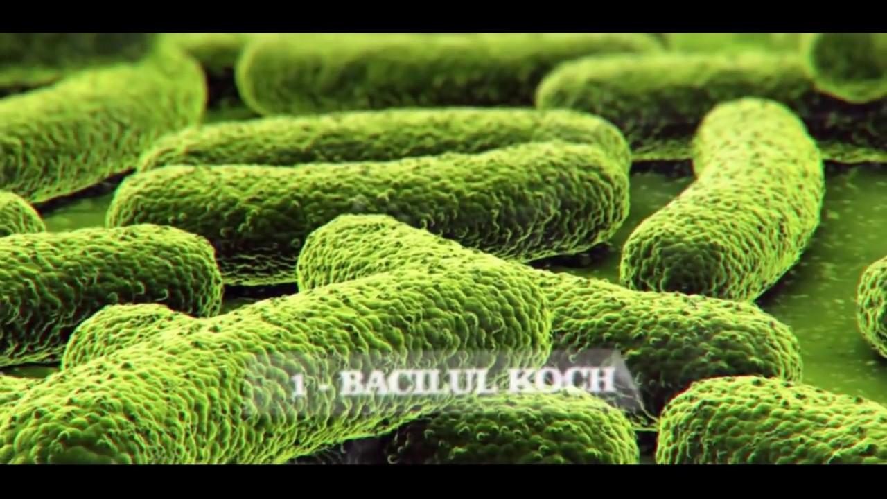 bacteriile sunt paraziti