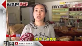 驚喜! 中橫直擊 台灣黑熊媽媽帶2小熊過馬路