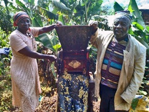 Campaign for Organic Coffee Farmers in Cameroon, Africa