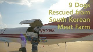 Great Plains SPCA Assists In South Korean Dog Rescue Mission