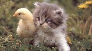 Animales lindos son amigos - Amistades animales Compilación 2015 [NUEVO VIDEO HD]