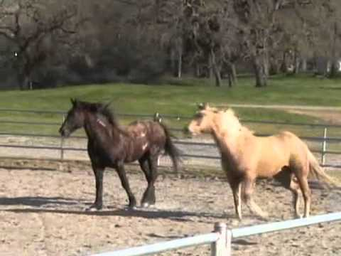 Horses at Liberty- Horses being Horses- Release-Comfort- Rick Gore Horsemanship