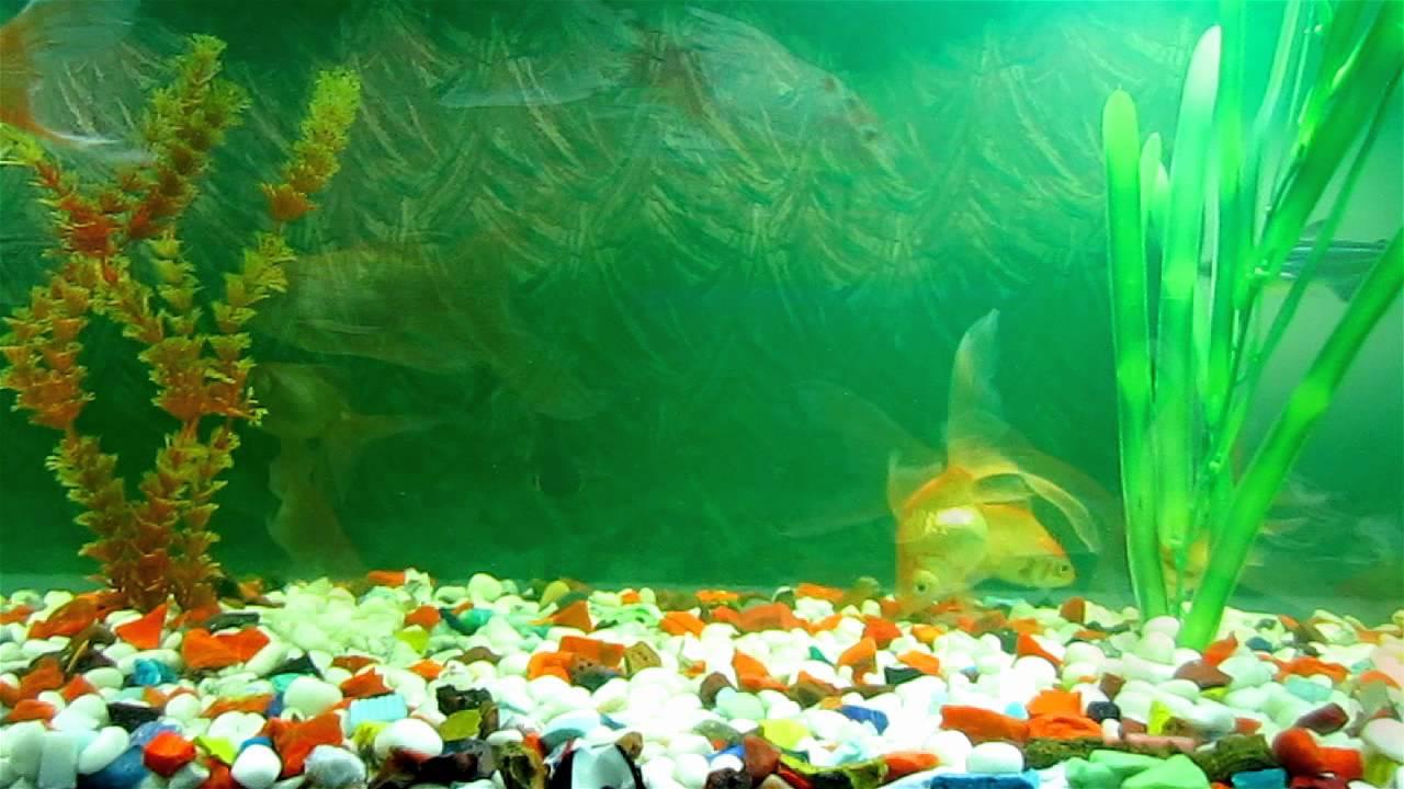 Скачать заставку на пк аквариум